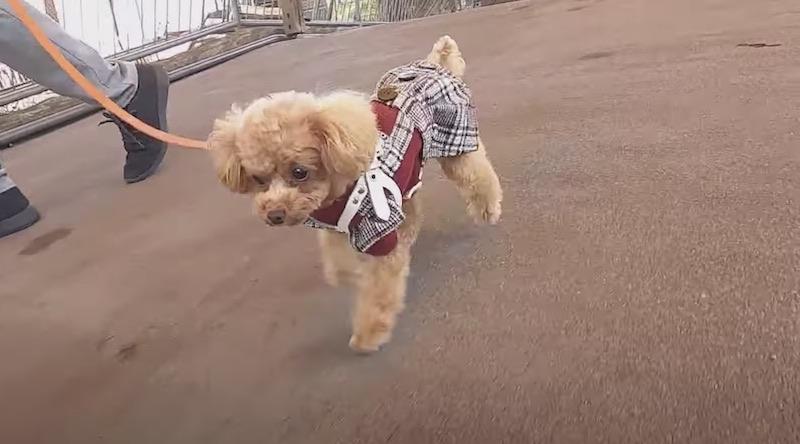 カドリードミニオン内を散歩する犬1