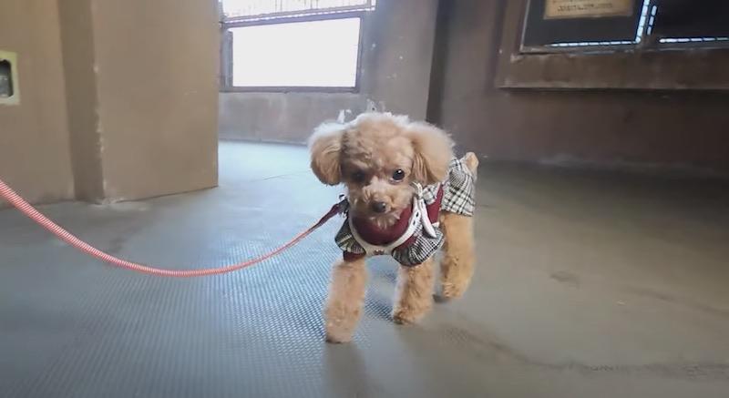 カドリードミニオン内を散歩する犬2