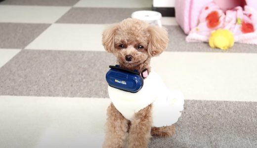 愛犬のリアルな気持ちが翻訳できる「バウリンガル」使用体験
