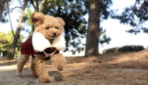 GoProを使った臨場感溢れる犬の動画を撮影する方法