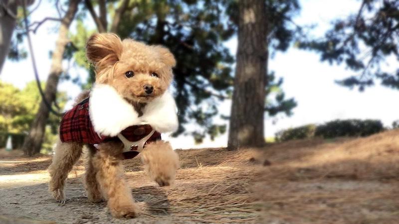 GoProで愛犬を撮影する方法