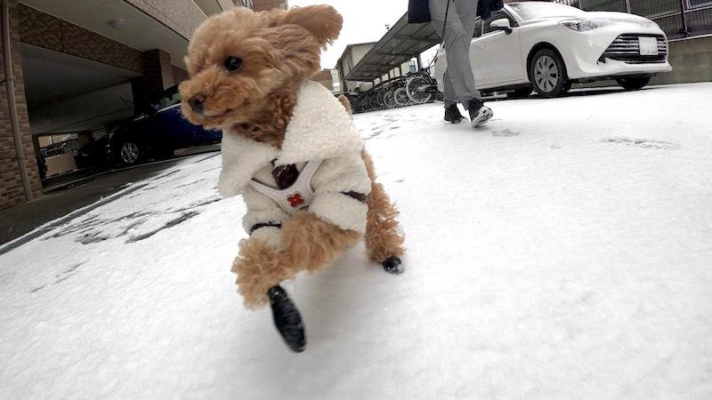 GoProで撮影した愛犬の3