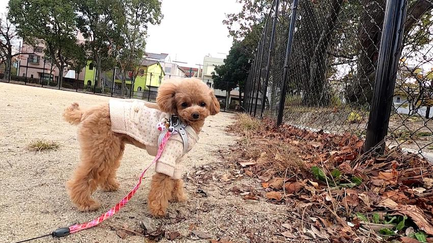 外で運動する犬
