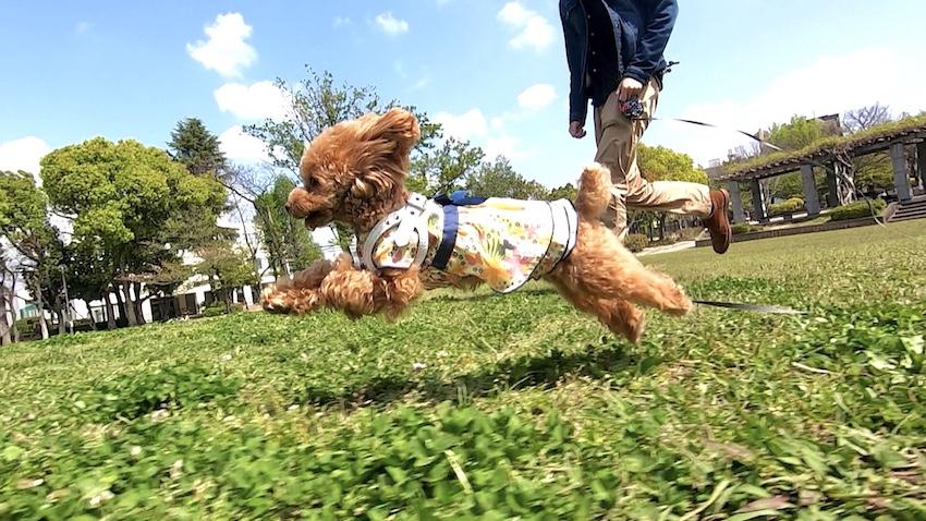ペットパラダイスの犬服1