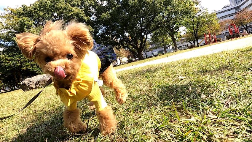 鎌倉ドッグの犬服3