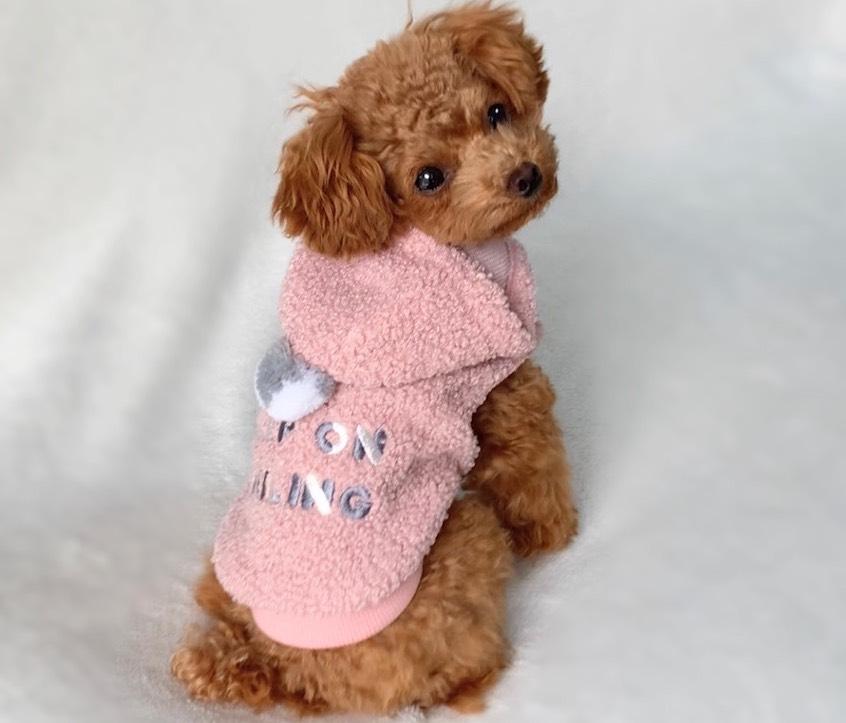 IDOG&ICATの犬服2