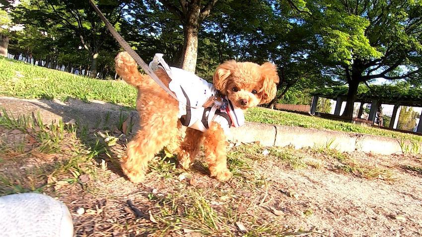 Radicaの犬服1