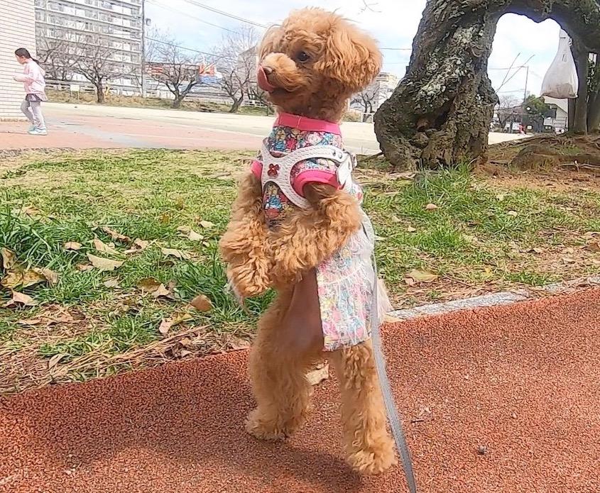 IDOG&ICATの犬服3