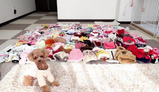 小型犬の洋服ならココ!100着以上購入して知ったおすすめ犬服サイト6選