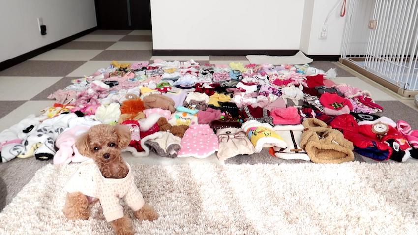 小型犬の犬服サイト