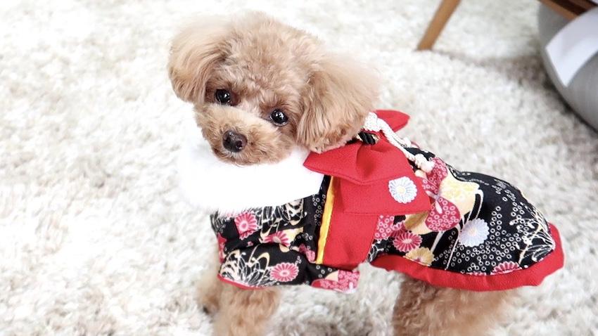 ペットパラダイスの犬服3
