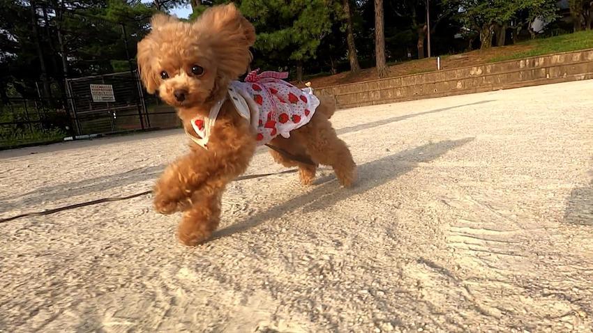 クークチュールの犬服3