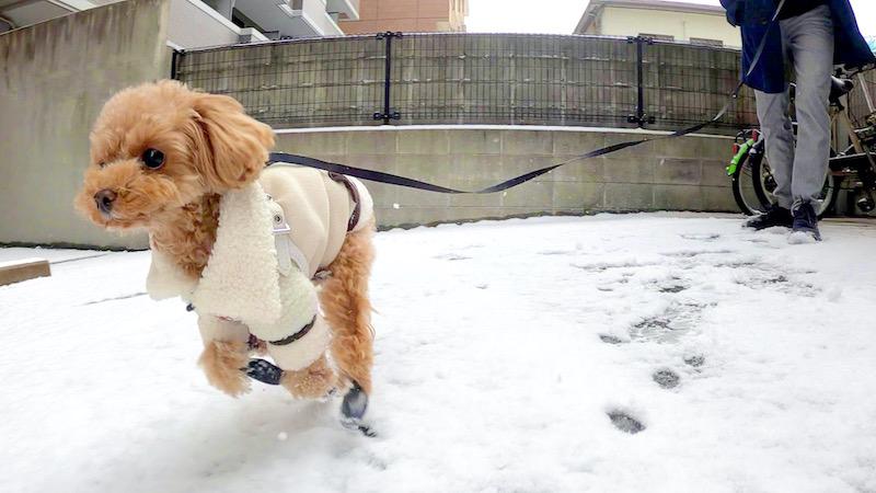 犬靴を履いて雪道を走る犬