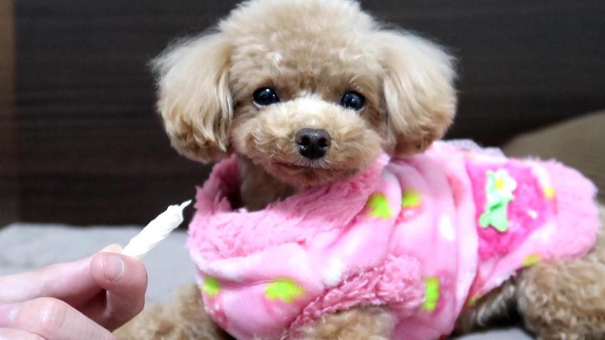 ペットパラダイスの犬服2