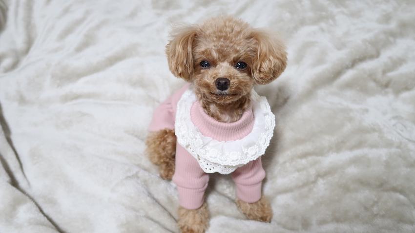 鎌倉ドッグの犬服1