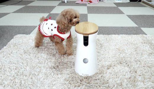 【Furbo実体験レビュー】ドッグカメラFurboを使用して気付いた点を解説