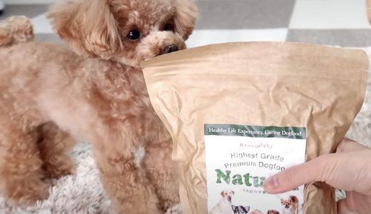 【体験レビュー】ナチュロルドッグフード実際に使ってみた感想と愛犬の変化