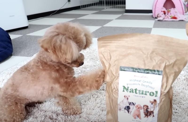 ドッグフード「ナチュロル」と犬