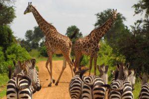 safari-tanzania-africa