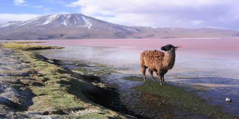 bolivia-immagine