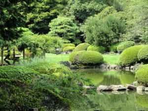 shinjuku-gyoen-national-garden-2