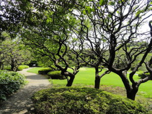 shinjuku-gyoen-national-garden-4