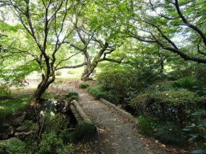 shinjuku-gyoen-national-garden-1