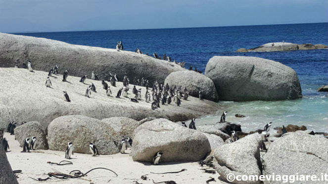 pinguini-sole-boulders-beach