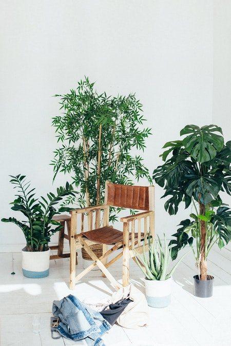 Læder spisebordsstol med armlæn i egetræ