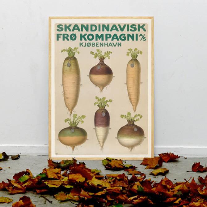 Grafisk turnip majroe plakat