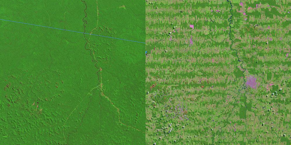 Regnskovens træer nedfældning