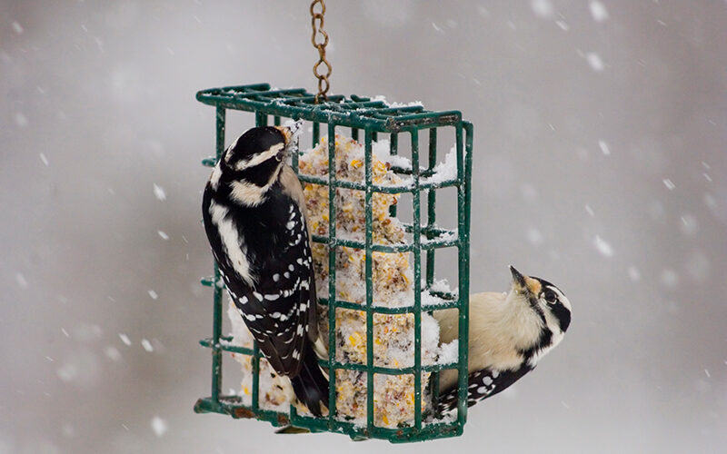 Protect you feathered friends with advice from Jerry Smith Feed & Seed