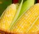 10 Sayuran yang Mengandung Karbohidrat Terbaik Untuk Tubuh