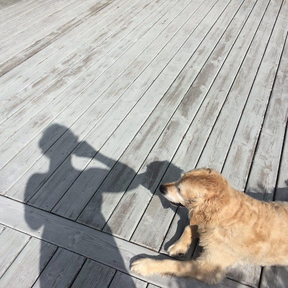 Shadow of Allyson with Sadie lying on a deck