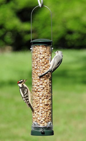 Out-of-the-Shell Peanut Feeders