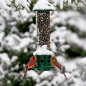 Squirrel Proof: Bird Feeders