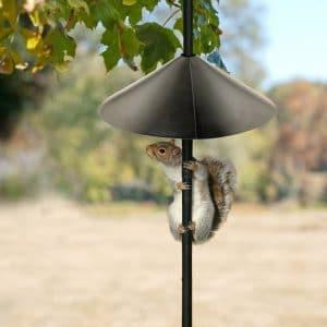 Squirrel & Raccoon Baffles