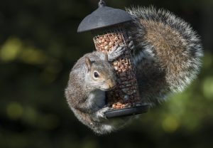 Squirrel Proof Products