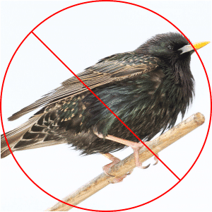 Starling Resistant Products