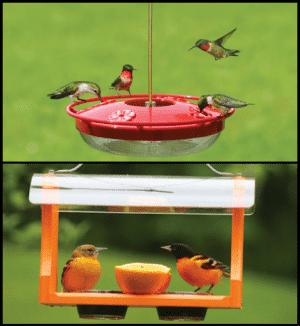 Hummingbird & Oriole