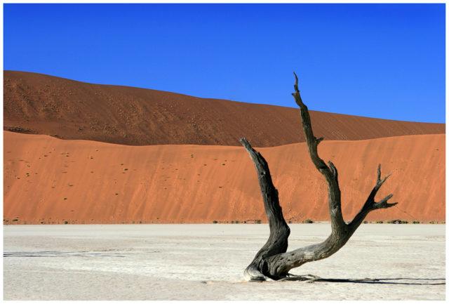 Branch in the desert