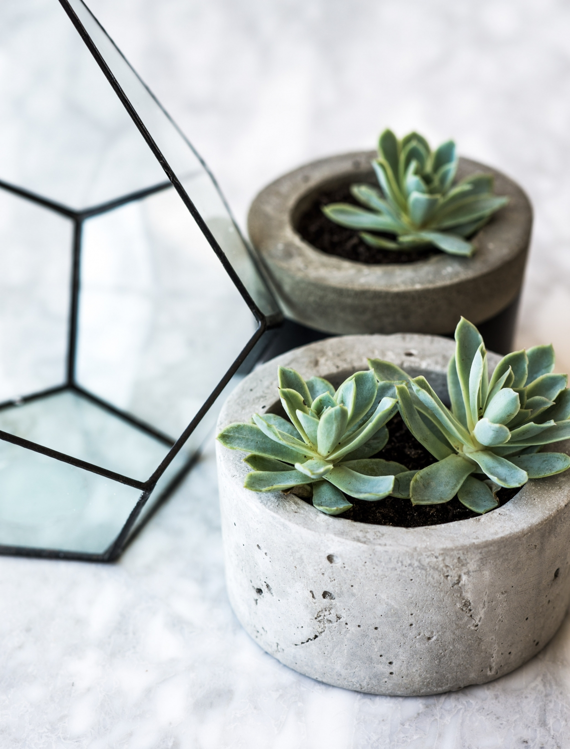 harper-and-harley_Etsy_plants-in-an-office_3