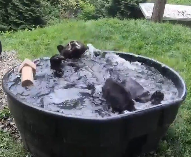 Der Badebär