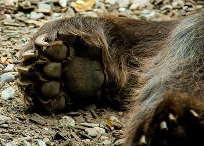 Tatze eines Braunbären - Uli Stoll Outdoor-Fotografie info@parknplay.de / pixelio.de