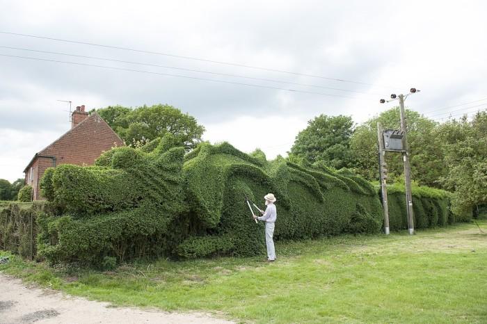 Dragon Hedge 5