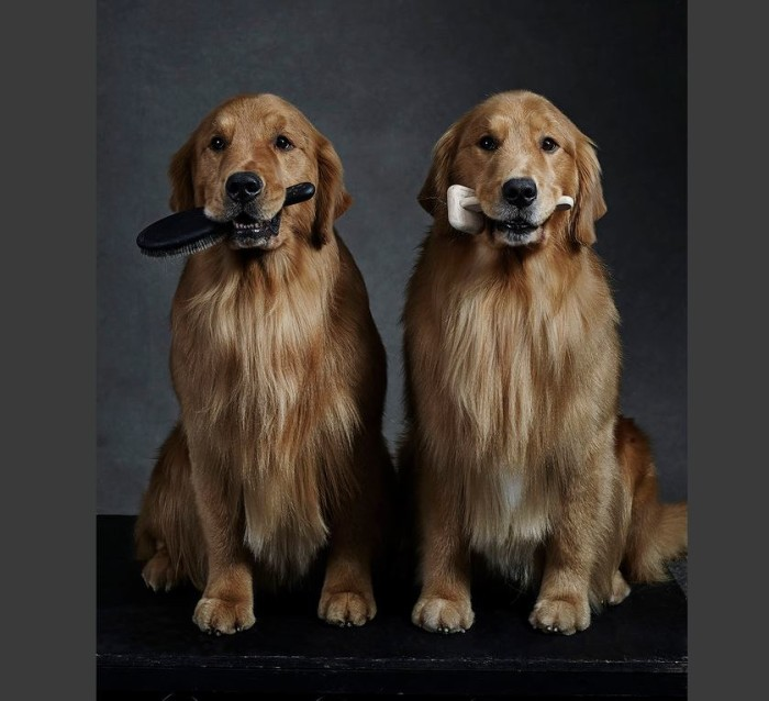 Westminster Kennel Club Dog Show 2015 1