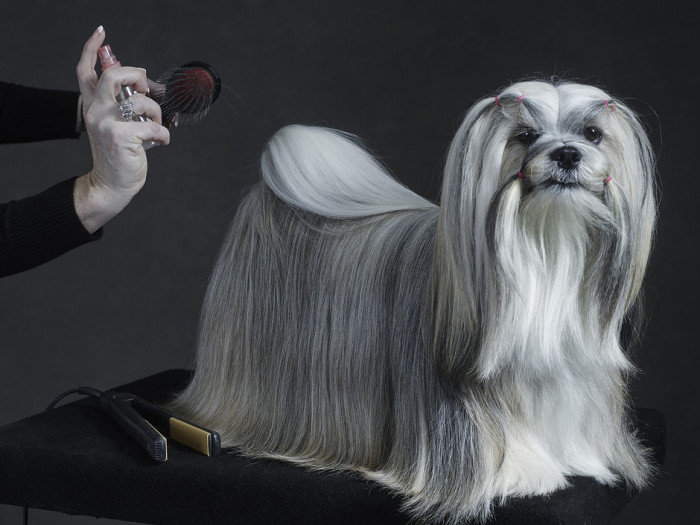 Westminster Kennel Club Dog Show 2015 2