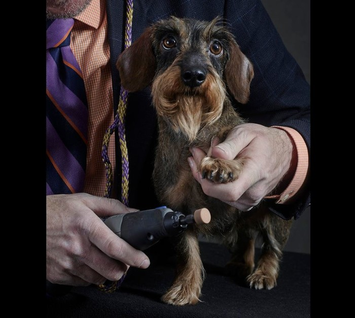 Westminster Kennel Club Dog Show 2015 3