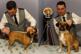 Tailor-Made Doggy Armour
