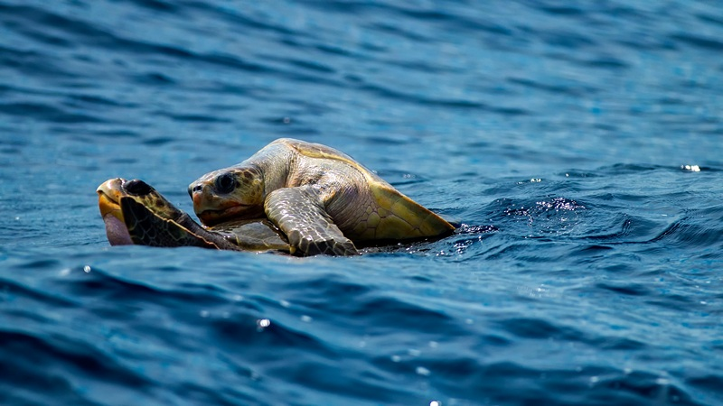 Mother Nature's Miracles Tour Sea Turtles Galapagos